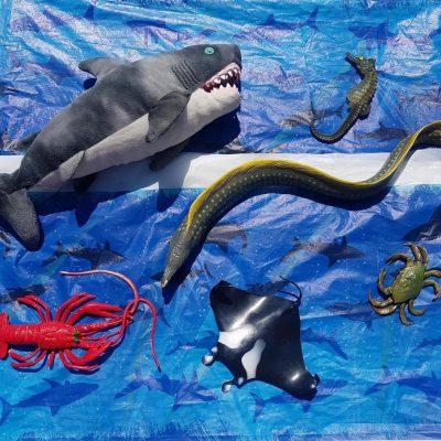 PIrate Sea Creature Game